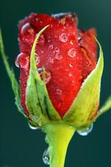Spring by Mamooli