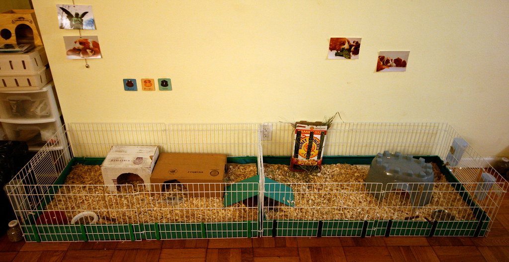 The guinea pig cage the guinea pig cage two connected for How to guinea pig cage
