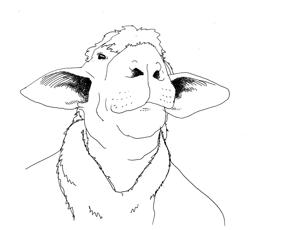 Line Drawing Of Sheep Face : How to draw a sheep step by