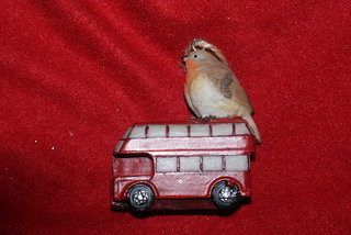 Largest Robin in the world or the smallest bus | by Moo-lissa