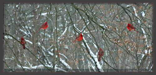 Cincinnati Nature Center Red Wing Trail