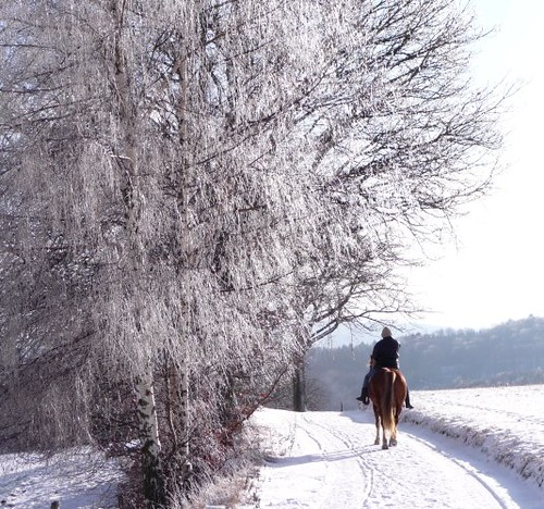 """rider on horseback in the snow"" 