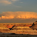 Bisti Wilderness Area - Clouds Without Rain Again
