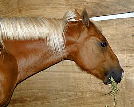 American Quarter Horse ~ CABALLO CUARTO DE MILLA ~ Origina…   Flickr