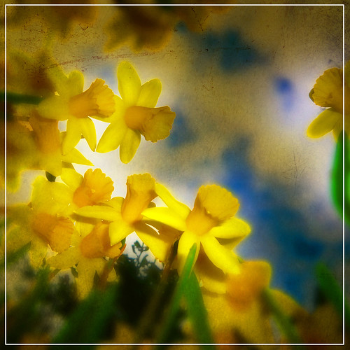 Easter Bloom | by Nick Kenrick..