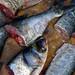 Fish Parts
