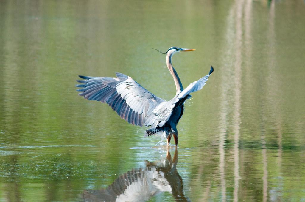 Blue Heron Park Nature Center
