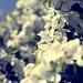 Floral_002