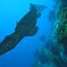 Taniwha Reef