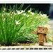 | Danbo Asked For a Flower  Again |