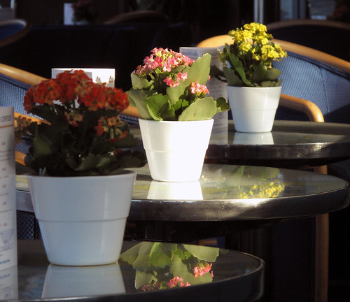 Potted Plants in Sunlight | by Simon Downham