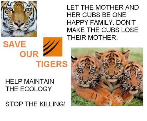 Save Tiger Images Save Our Tigers Poster