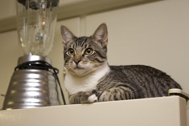 Kitty In A Blender ~ Blender cat flickr photo sharing