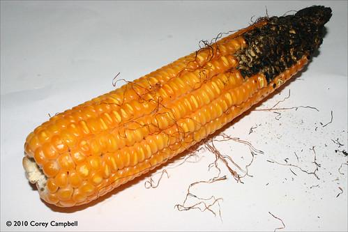 burnt corn online dating Today's and tonight's burnt corn, al weather forecast, weather conditions and doppler radar from the weather channel and weathercom.