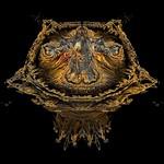 Phoenix Mandelbulb Fractals Gallery
