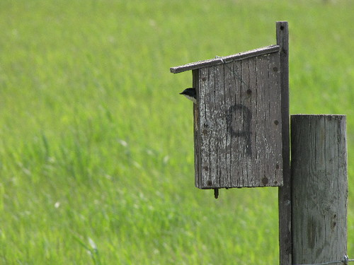 how to build nest box for swallow