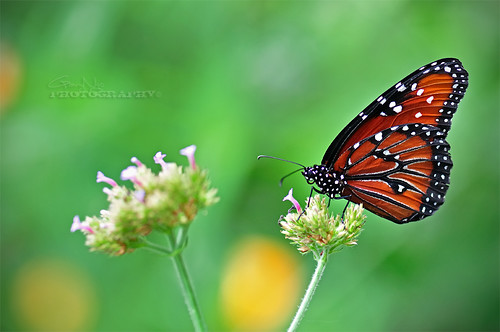 Butterfly #1 | by Gary Ngo | Photography