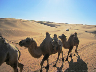 Camels | by dolldalera