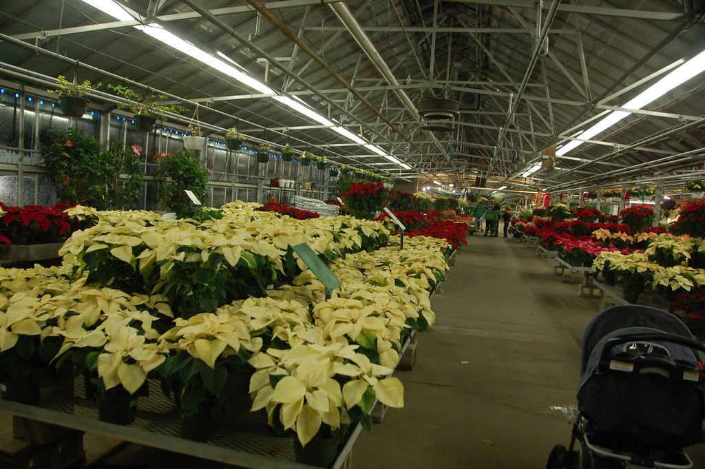 Mahoney 39 S Christmas Garden Center Winchester Ma Poinsett Flickr