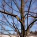 Branch - Wide Open
