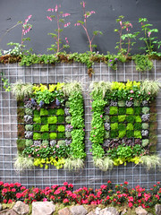 Vertical Garden | by The Blue Girl