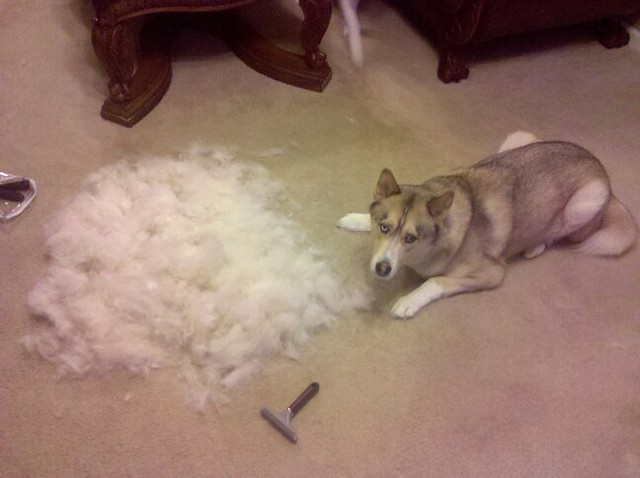 2010 Shedding Season This Is The Pile From Round 4 With L Flickr