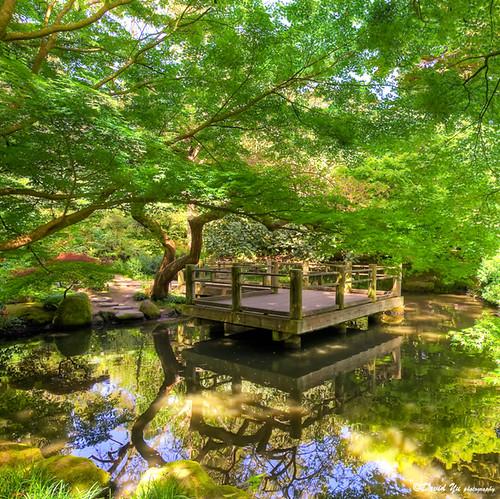 japanese moon garden san francisco botanical garden flickr