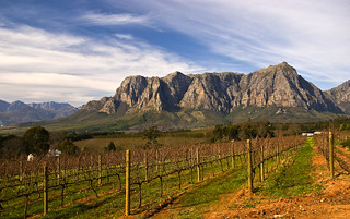 Winelands | by andreaskoeberl