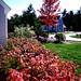 westborough fall colors 2