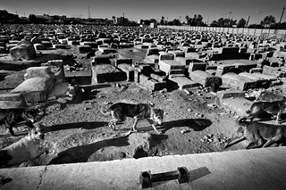 E - Sayed Ahmad cemetery, Iraq | by United Nations Development Programme