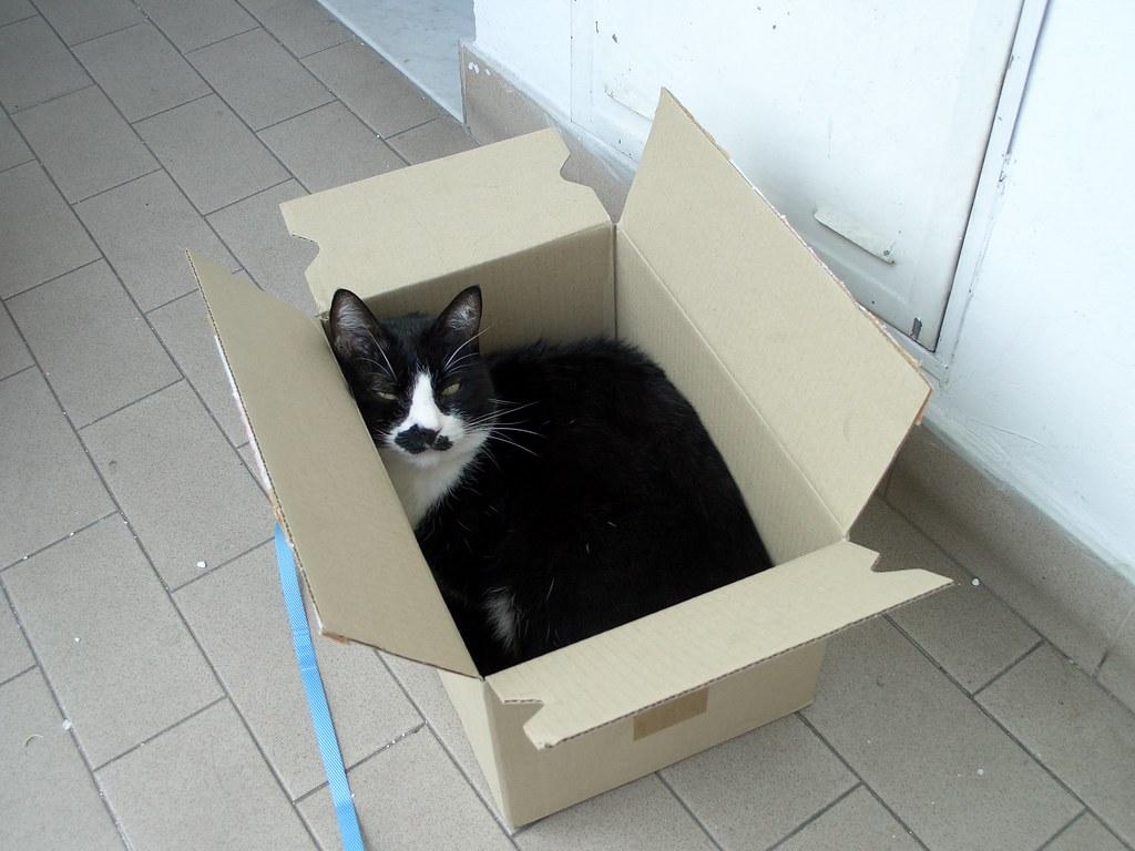 Cardboard Box Cat Maze