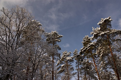 winter forest (3) | by dittma_d