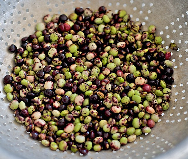 pigeon peas pigeon peas or guandu are available for sale