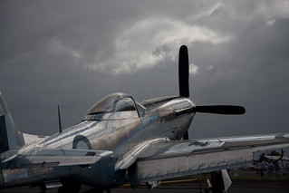 Burnished Mustang | by Stephen Edmonds