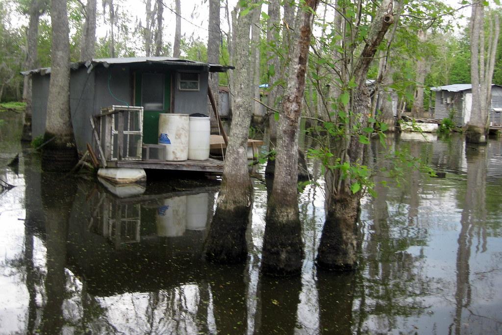 Swamp Tours Louisiana Albino Gater