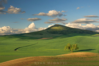 Steptoe Butte, Trees and Clouds | by Ryan McGinty