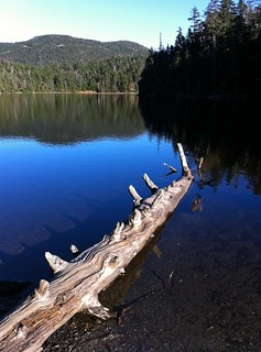 Sterling Pond Log (iPhone) | by Kirpernicus
