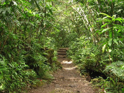 Hike to Manoa Falls, Honolulu, Hawaii (10) | by Ken Lund