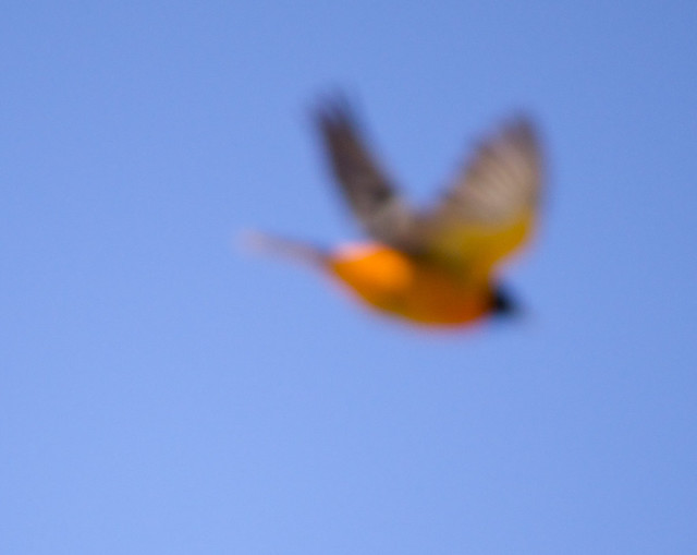 orange flight