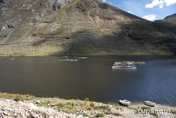Laguna pumacocha criadero de truchas en la laguna for Crianza de truchas en lagunas