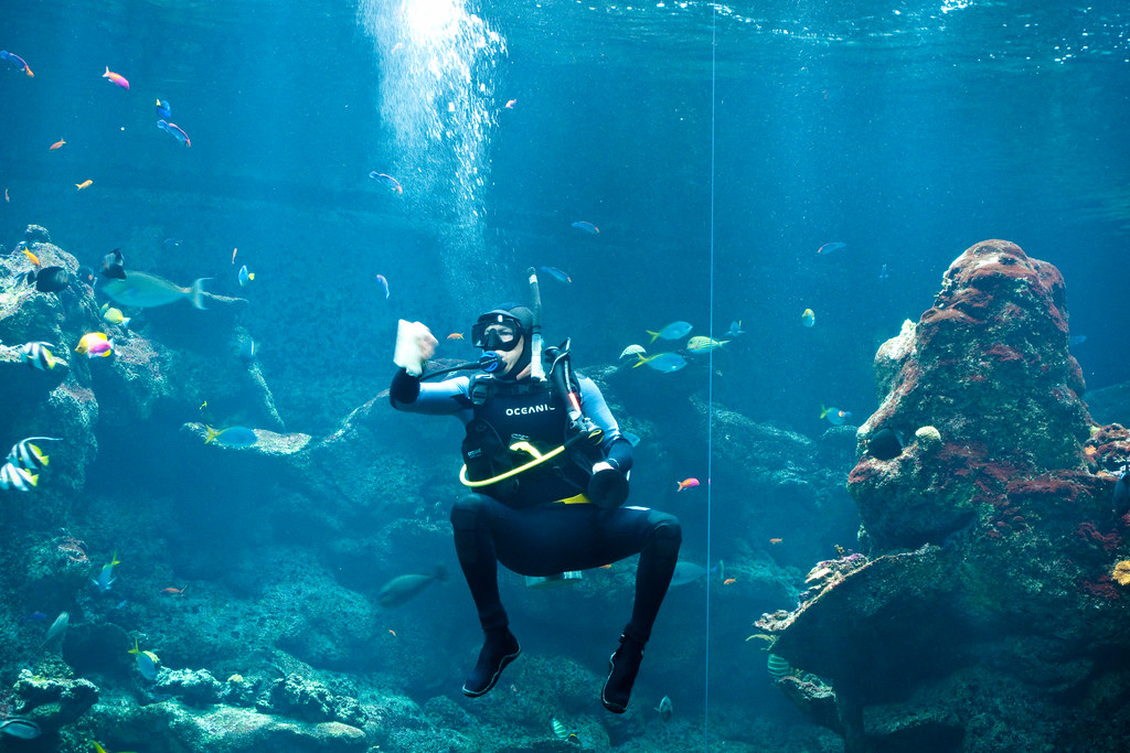 Cleaning A Diver Cleaning The Glass Of The Philippine
