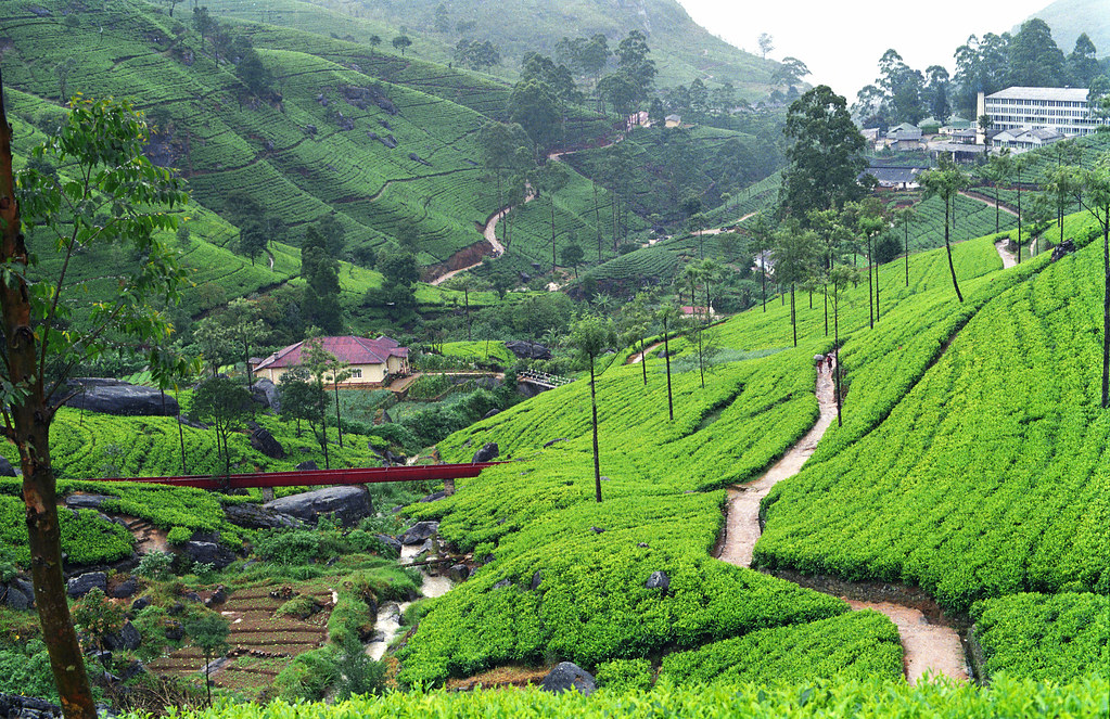Manicured landscape, Sri Lanka | With Christmas and New Year… | Flickr