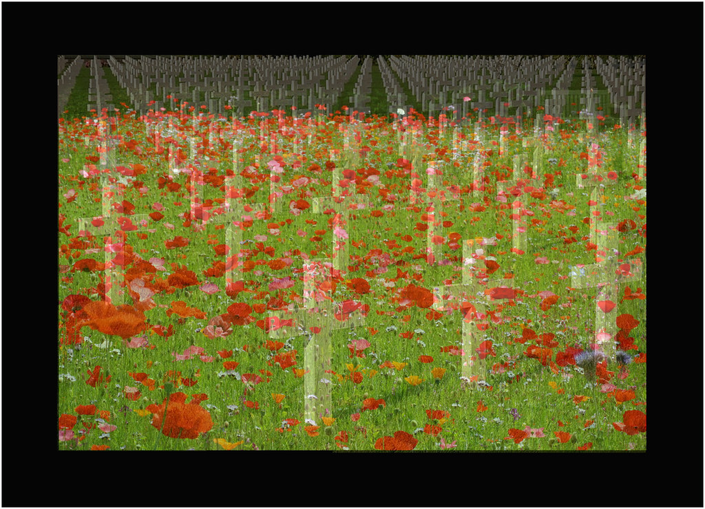 Image result for in flanders field