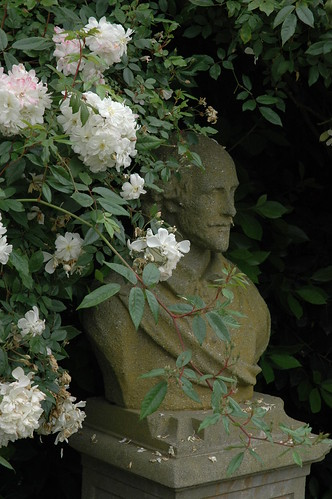 shakespeare garden 39 snow goose 39 roses a bust of the bard. Black Bedroom Furniture Sets. Home Design Ideas