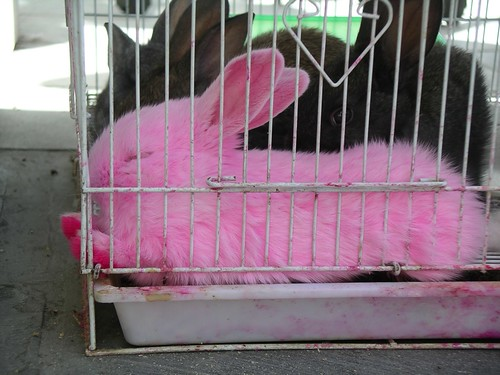 R Is For Rabbit Sleeping pink bunny | ...