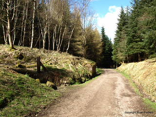 Blairadam Forest Kelty | by B4bees