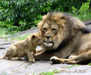 Present and Future Lion King | by Carol ~ CAP