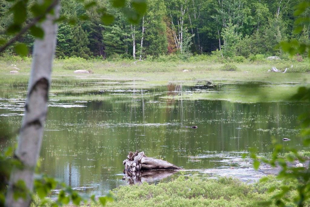 Maine swamp land sean bordner flickr for Free land maine