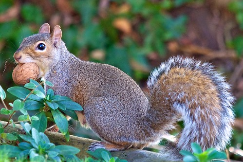 Blimey i've got a nut wedged in my mouth !! | by stanley.ashbourne