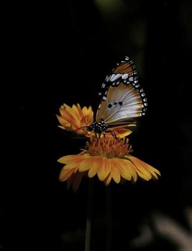 At The Butterfly Garden In Gainesville Fl Jennifer Flickr